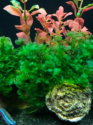 Мой нано-аквариум 30 литров kaiassowa  - IMG_6852.JPG