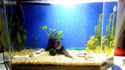 Детский аквариум 35 литров Акварина  - Посадила растения.jpg