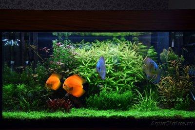 Фото аквариумов объемом от 101 до 250 литров - 2222.jpg