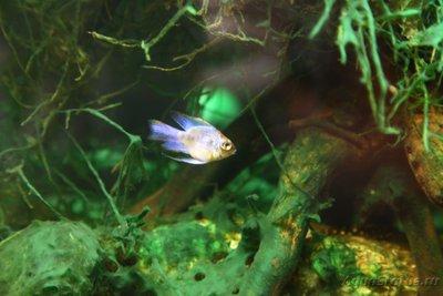 Водоросли в аквариуме виды фото