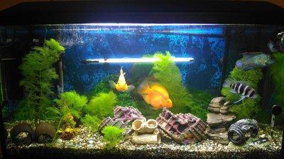 Выбор внешнего фильтра для аквариума. Какой выбрать внешний фильтр? - 75tcJdoGBH0.jpg