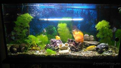 Выбор внешнего фильтра для аквариума. Какой выбрать внешний фильтр? - Ry9jhGJ_1WA.jpg