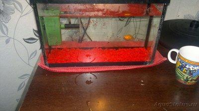 Помогите опознать рыбку опознание рыб  - sRjSHWqBtWA.jpg