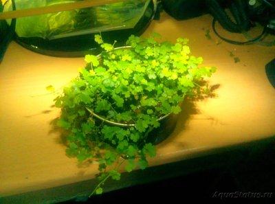 Светодиодное освещение аквариума - 1485583441297-1206366701.jpg