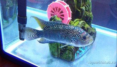 Помогите опознать рыбку опознание рыб  - Скриншот_07_02_2017_22_20_32.jpg