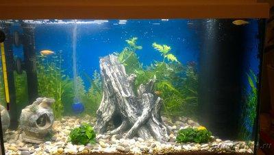 Выбор внутреннего фильтра для аквариума. Какой выбрать внутренний фильтр? - аква.jpg