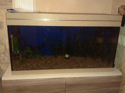 Мой аквариум первачок на 150 литров vov4ik  - 20170214_183558.jpg