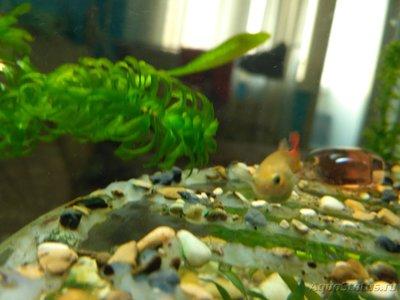 Беременна ли рыбка в аквариуме? - IMG_20170215_124219.jpg