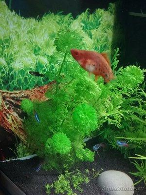 Опознание аквариумных растений - 1487512835694-2104796459.jpg