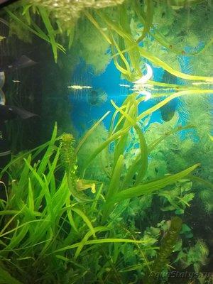 Мой аквариум 110 литров yulia211  - 1487929617866-1308401047.jpg