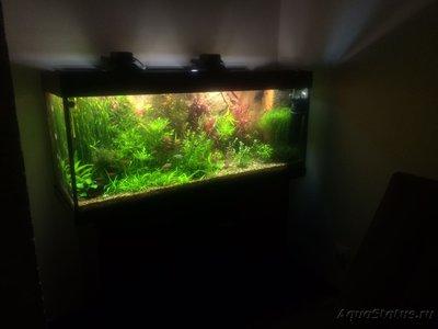 Фото аквариумов объемом от 101 до 250 литров - IMG_5296.JPG