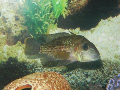 Помогите опознать рыбку опознание рыб  - DSCN8368.JPG