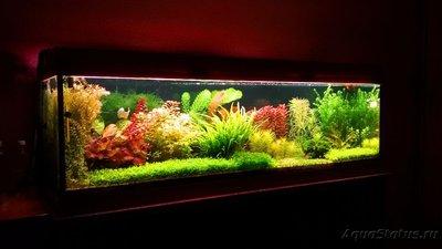 Фото аквариумов объемом свыше 401 литра - 20170301_193012.jpg