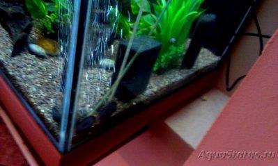 Оптимальное расположение аэраторов в двух метровом аквариуме? - IMAG3556.jpg