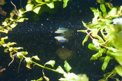 Помогите опознать рыбку опознание рыб  - 700_2928_web.jpg