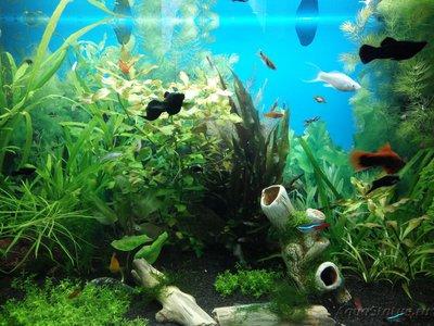 Мой аквариум 110 литров yulia211  - IMG_20170327_154332.jpg
