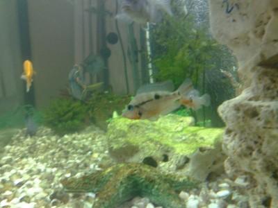 Помогите опознать рыбку опознание рыб  - 10062011382.jpg