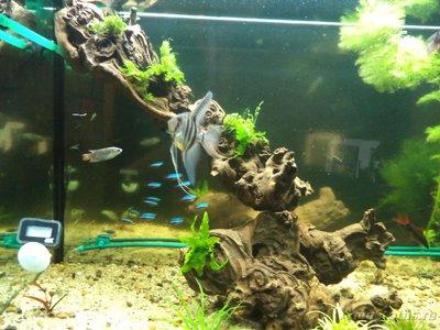 Светодиодное освещение аквариума - DSC01618.JPG