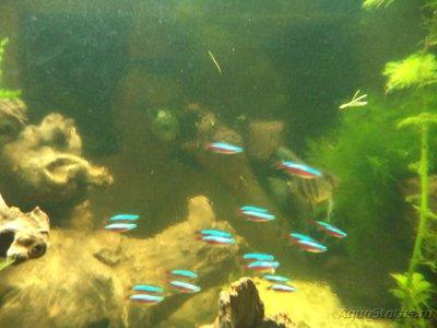 Светодиодное освещение аквариума - DSC01621.JPG