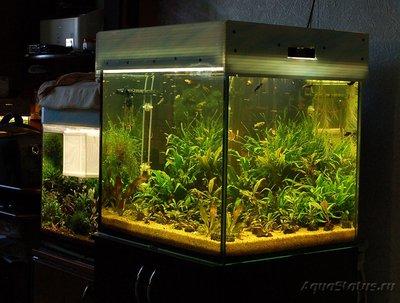 Выбор внешнего фильтра для аквариума. Какой выбрать внешний фильтр? - DSC_7110.JPG