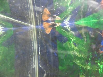 Мой аквариум 40 литров Catikc  - SAM_4085.JPG