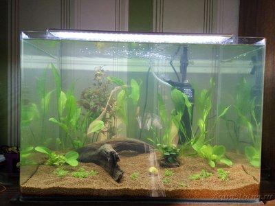 Мой аквариум 50 литров Sunny  - IMG_20170401_165720.jpg