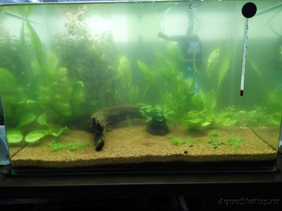 Мой аквариум 50 литров Sunny  - IMG_20170502_145111.jpg