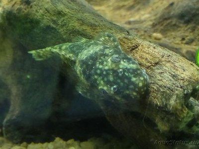 Мой аквариум 50 литров Sunny  - IMG_20170409_195558_HDR.jpg