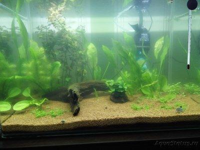 Мой аквариум 50 литров Sunny  - сегодня 02 мая.jpg