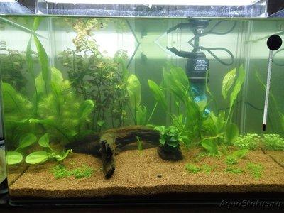 Мой аквариум 50 литров Sunny  - 03 мая.jpg