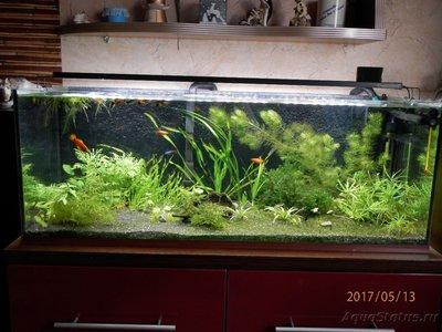 Мой аквариум 100 литров Smelov  - P5130055.JPG