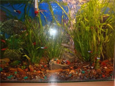 Мой аквариум на 30 литров болик  - .jpg