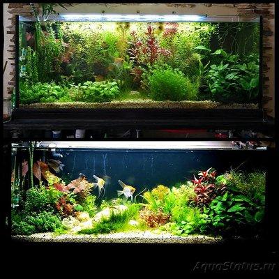 Редизайн растительного аквариума - redizayn_kirgizov.jpg