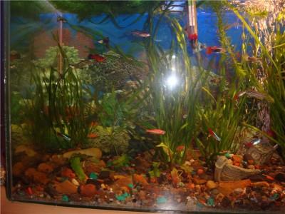 Мой аквариум на 30 литров болик  - .jpg2.jpg