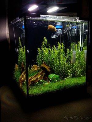 Аквариумные растения - опознание растений. - photo_2017-05-23_19-16-11.jpg