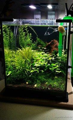 Аквариумные растения - опознание растений. - photo_2017-05-23_19-16-16.jpg