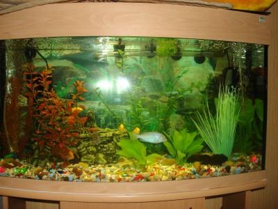 аквариум - DSC04843_thumb.jpg