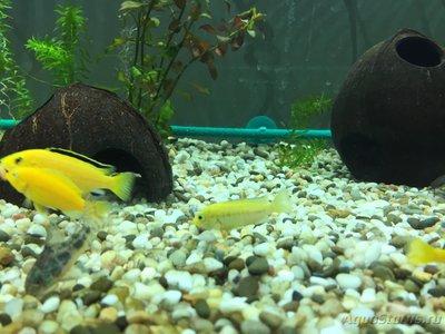 Помогите опознать рыбку опознание рыб  - RGGLkz_QEvs.jpg