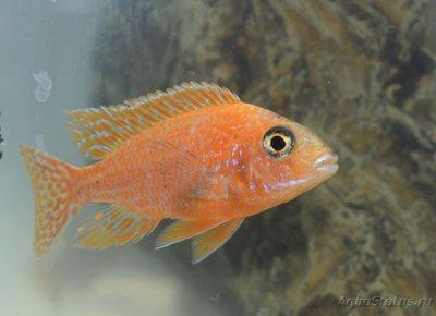 Помогите опознать рыбку опознание рыб  - DSC_0029.JPG