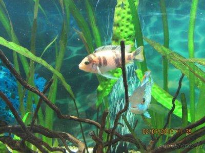 Помогите опознать рыбку опознание рыб  - IMG_1373.JPG
