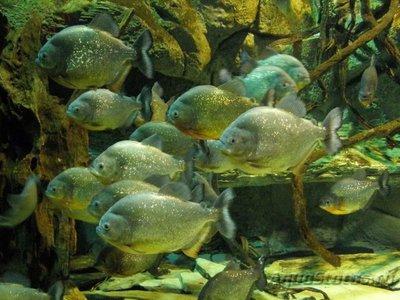 Фотографии необычных водных обитателей - 1433919385_14.jpg