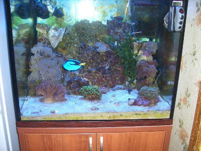 Мой морской аквариум 250 литров Сергей  - CIMG2258.JPG