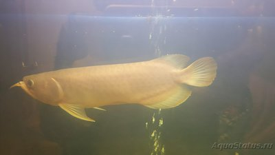 Помогите опознать рыбку опознание рыб  - image-0-02-04-c415a06ef4025911ce5240526f66e5bbd6b885b5b98a88b76d96cda8cae0a0a1-V.jpg