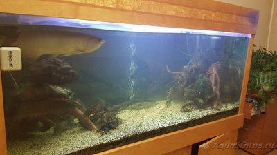 Помогите опознать рыбку опознание рыб  - IMG-20170718-WA0013.jpg