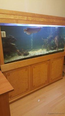Помогите опознать рыбку опознание рыб  - IMG-20170718-WA0007.jpg