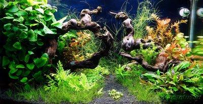 Подвесной аквариум 140 литров Фосса  - фото 1.JPG