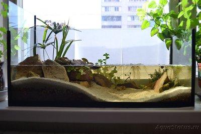 Продам аквариум 36л Московская обл.Электросталь  - DSC_0958.JPG