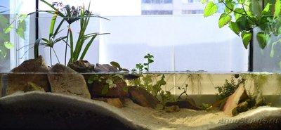 Продам аквариум 36л Московская обл.Электросталь  - DSC_1.jpg