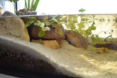 Продам аквариум 36л Московская обл.Электросталь  - DSC_0985.JPG