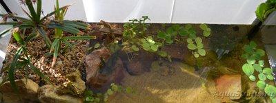 Продам аквариум 36л Московская обл.Электросталь  - DSC_2.jpg